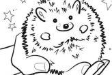 Pet Hedgehog Coloring Pages
