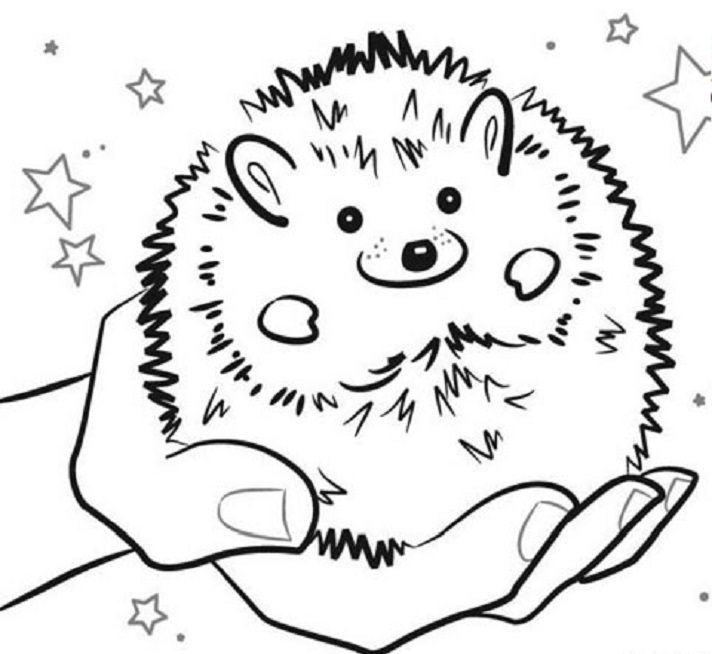 Pet Hedgehog Coloring Pages