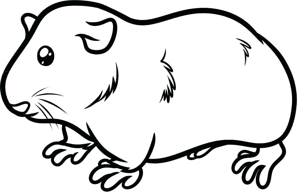 Print Guinea Pig Coloring Pages