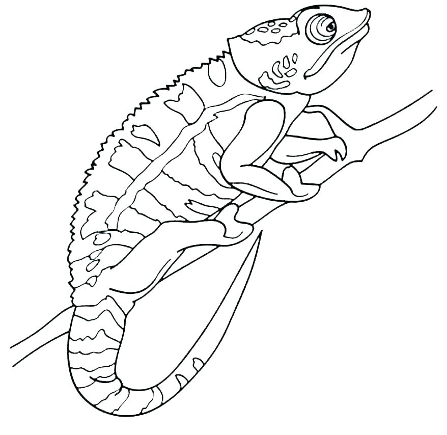 graphic about Chameleon Printable named Chameleon Coloring Webpages - Perfect Coloring Web pages For Small children