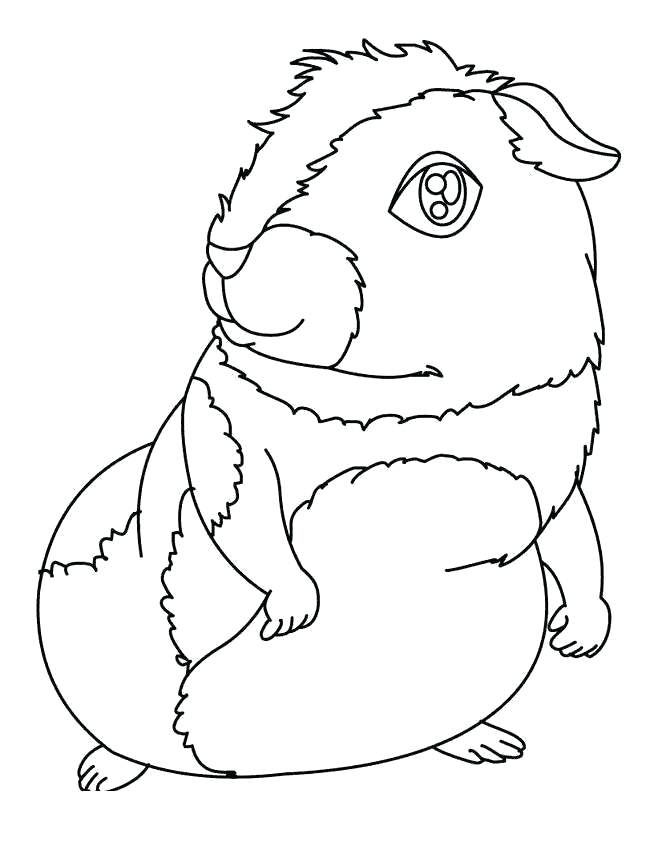 Printable Guinea Pig Coloring Pages