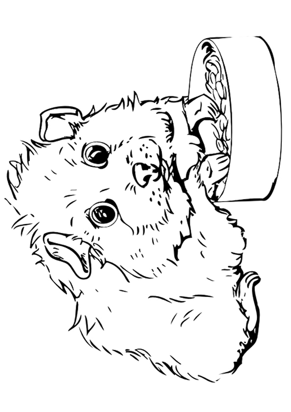 Realistic Guinea Pig Coloring Pages