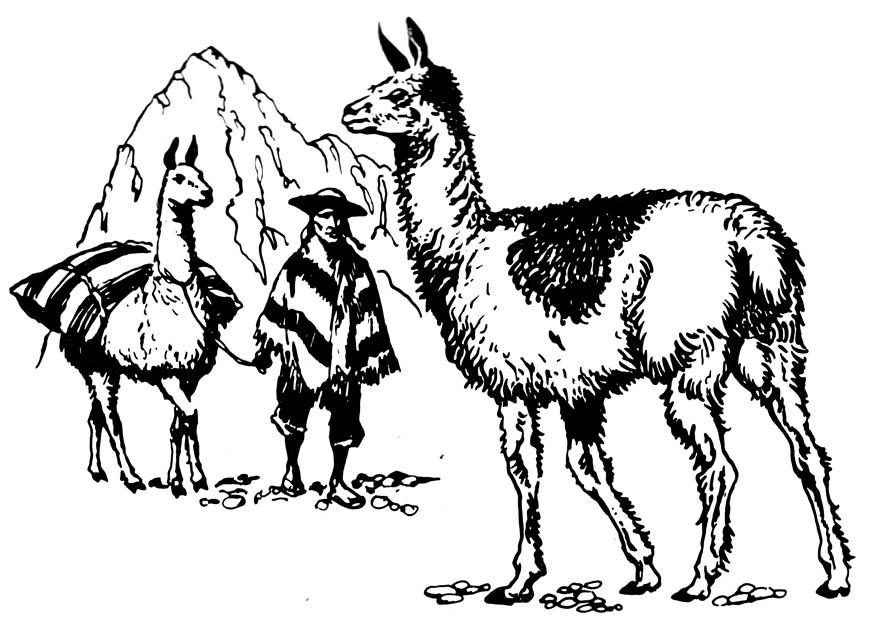 Realistic Llamas Coloring Page