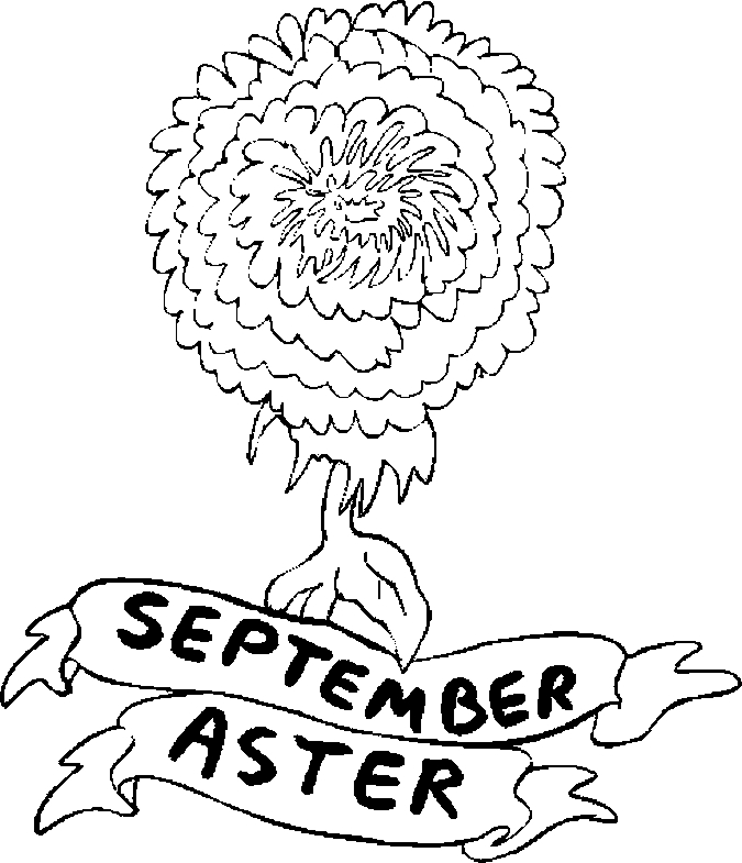 September Aster Flower Coloring Pages