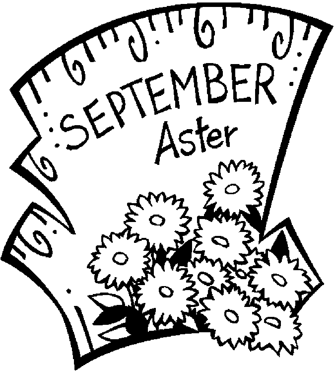 September Aster Flowers Coloring Page