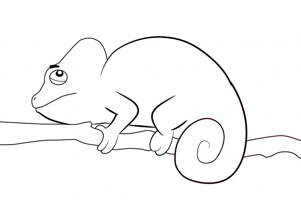 Simple Chameleon Coloring Pages