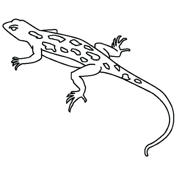Simple Gecko Coloring Pages