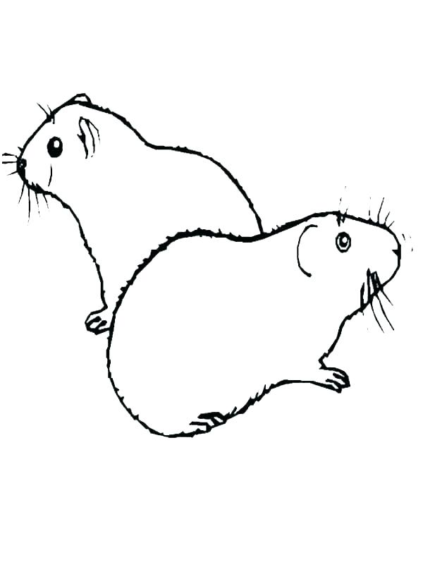 Two Guinea Pigs Coloring Page