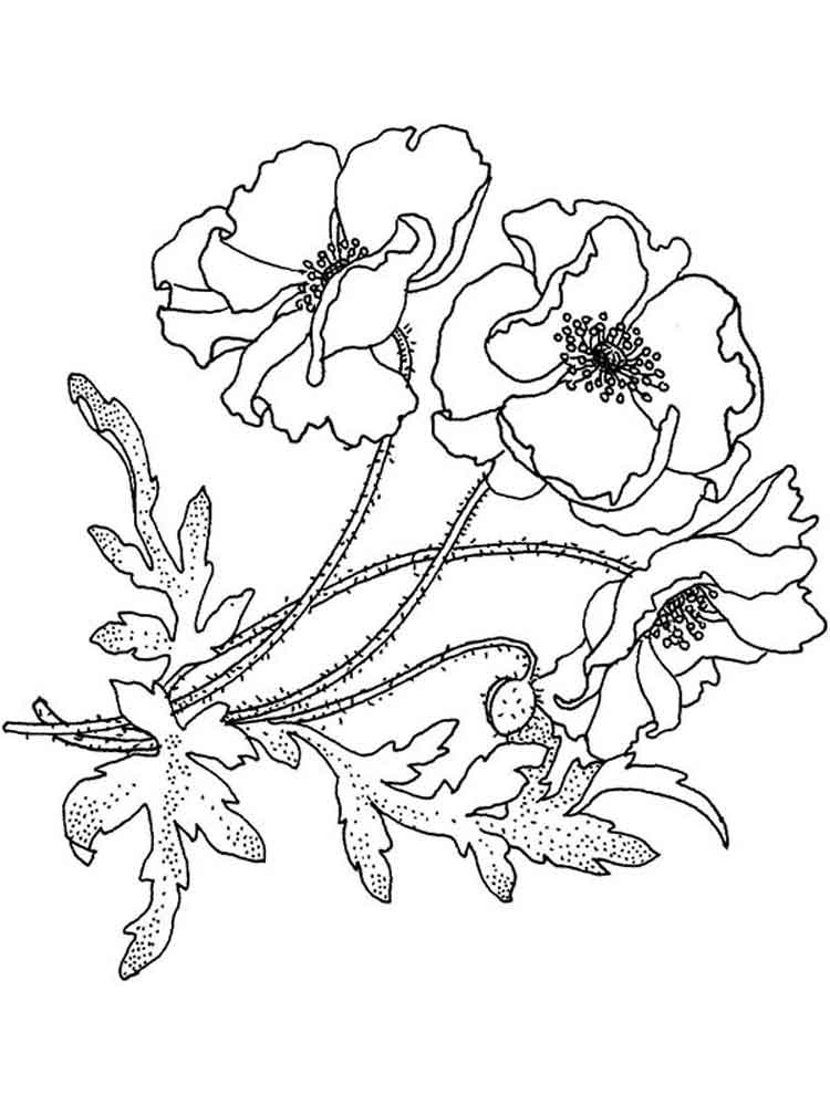 Beautiful Poppies - Flower Coloring Pages
