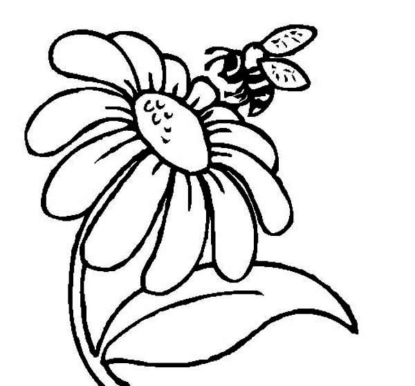 Bee on Daisy Flower Coloring Page