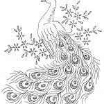 Color Peacocks Printable Sheet