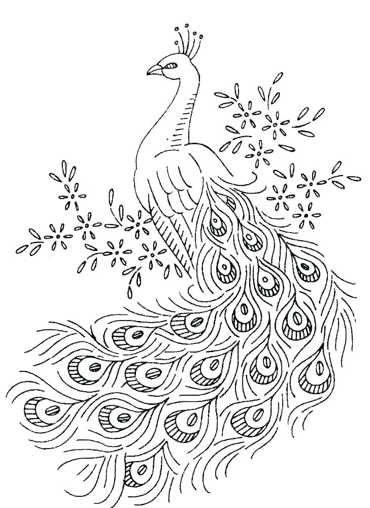 Color Peacocks Printable Sheet