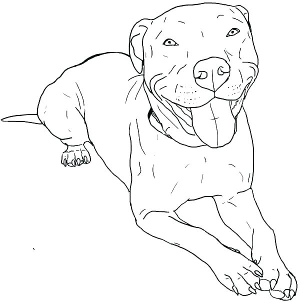 Cute Pitbull Coloring Page