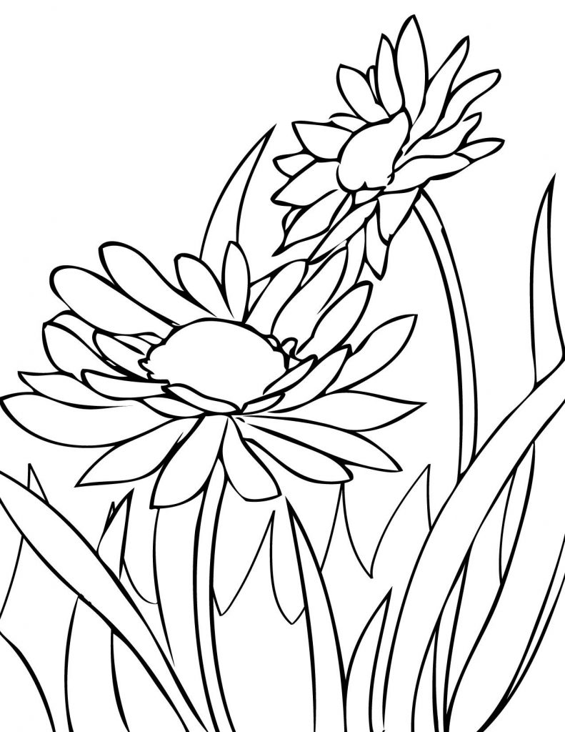 Daisies Coloring Page