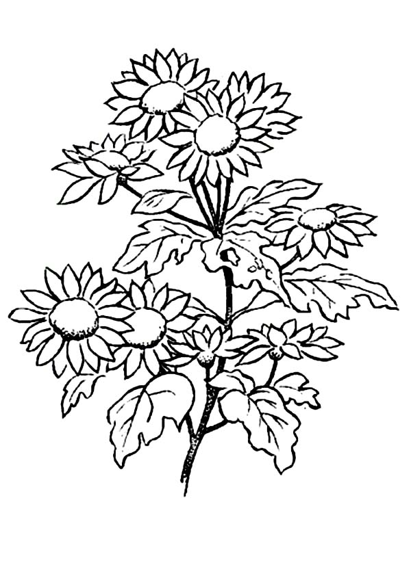 Daisies Printable Coloring Page