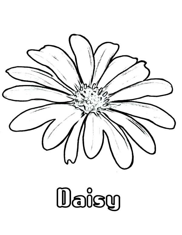 Daisy Coloring Page Printable