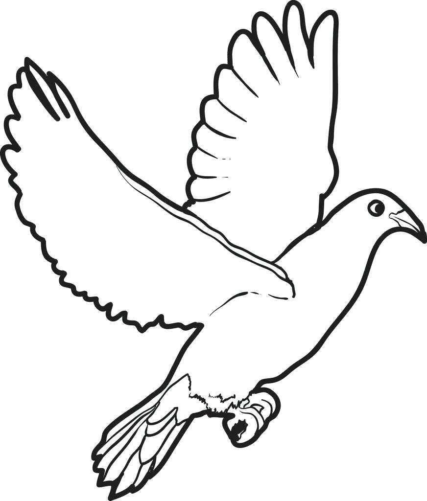 Dove Coloring Pages Best Coloring