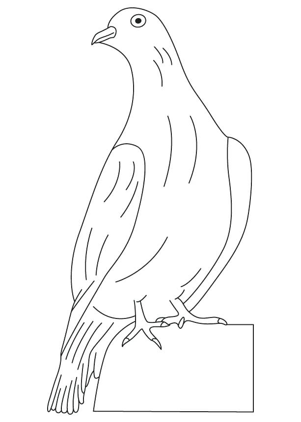 Dove Sitting Coloring Page