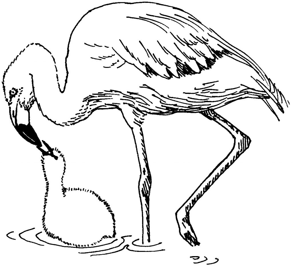 Flamingo Mom and Baby Coloring Page