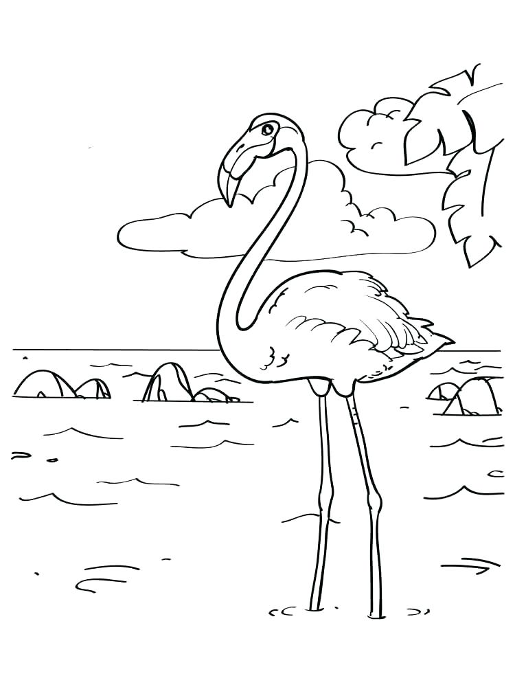 Flamingo Printable Coloring Page