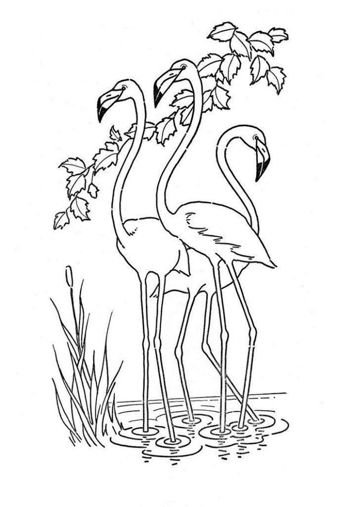 Flamingos Coloring Page