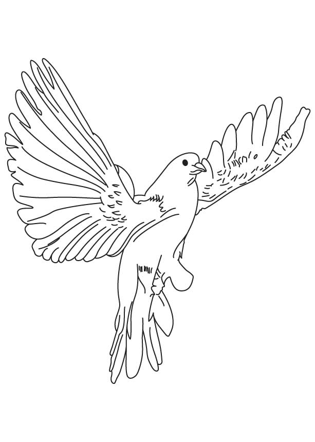 Flying Dove Coloring Pages