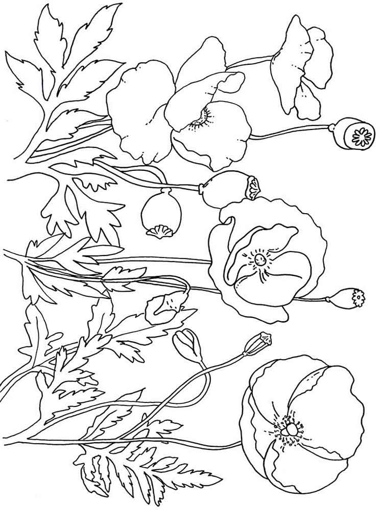 Garden Poppies Coloring Page
