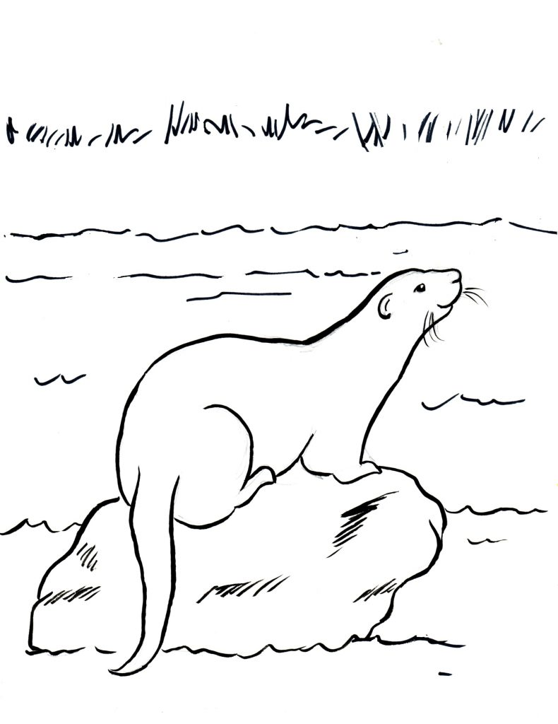 Otter On A Rock Coorng Page
