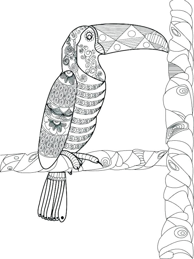 Pattern Toucan Coloring Pages