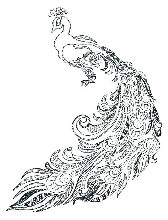 Peacock Coloring Page Printables