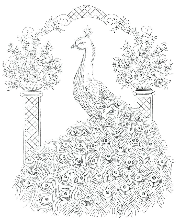 Peacock Printable Coloring Pages