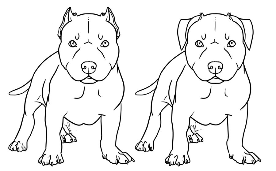 Pitbull Puppies Coloring Page