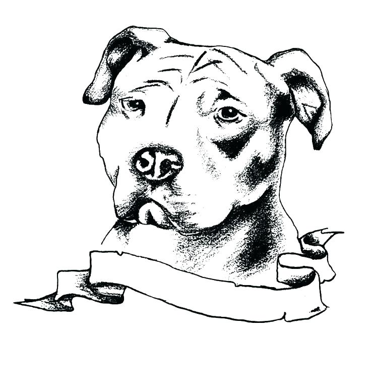 Pitbull With Banner Coloring Page