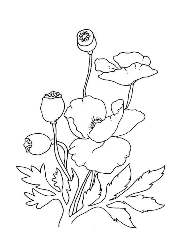 Poppies Coloring Page Printable