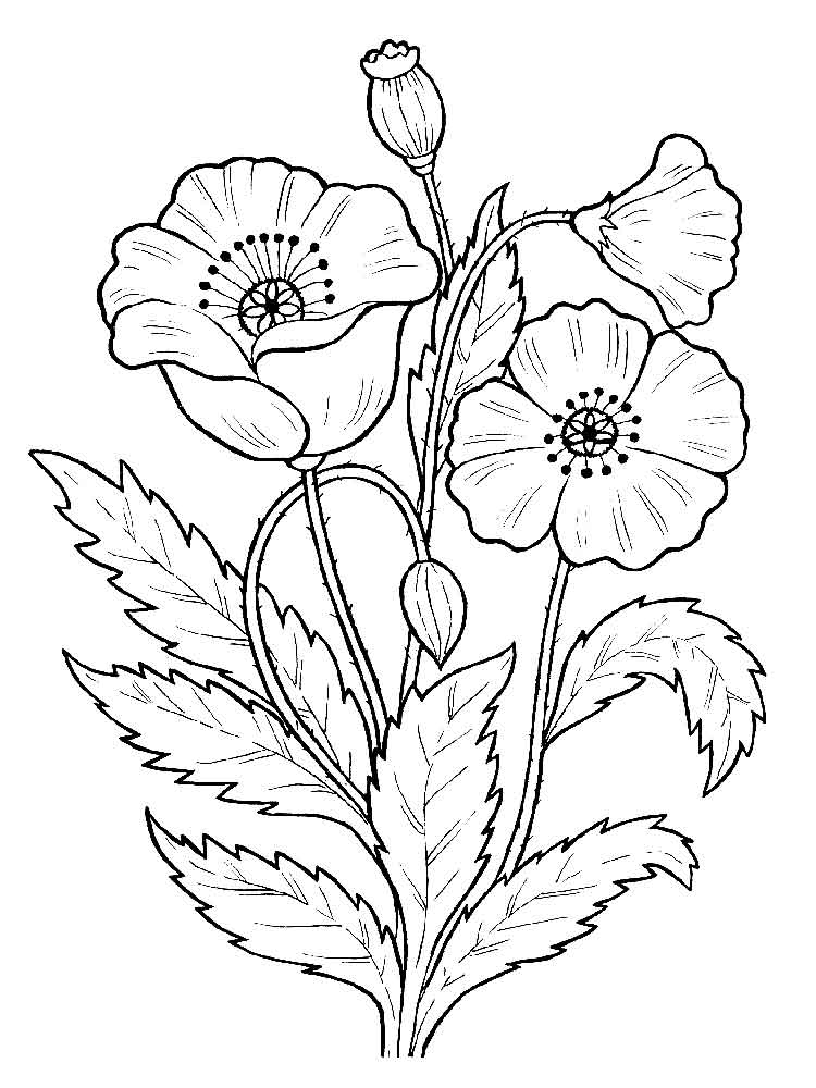 Poppies Coloring Pages