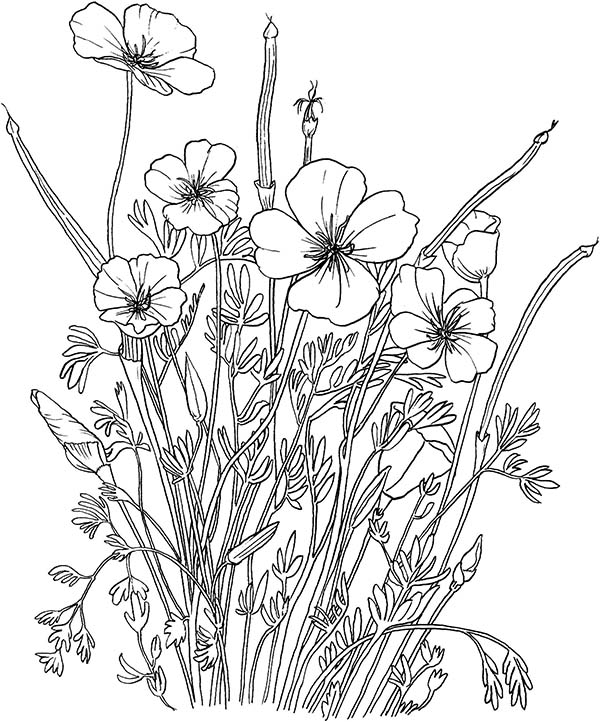 Poppies - Flower Coloring Page