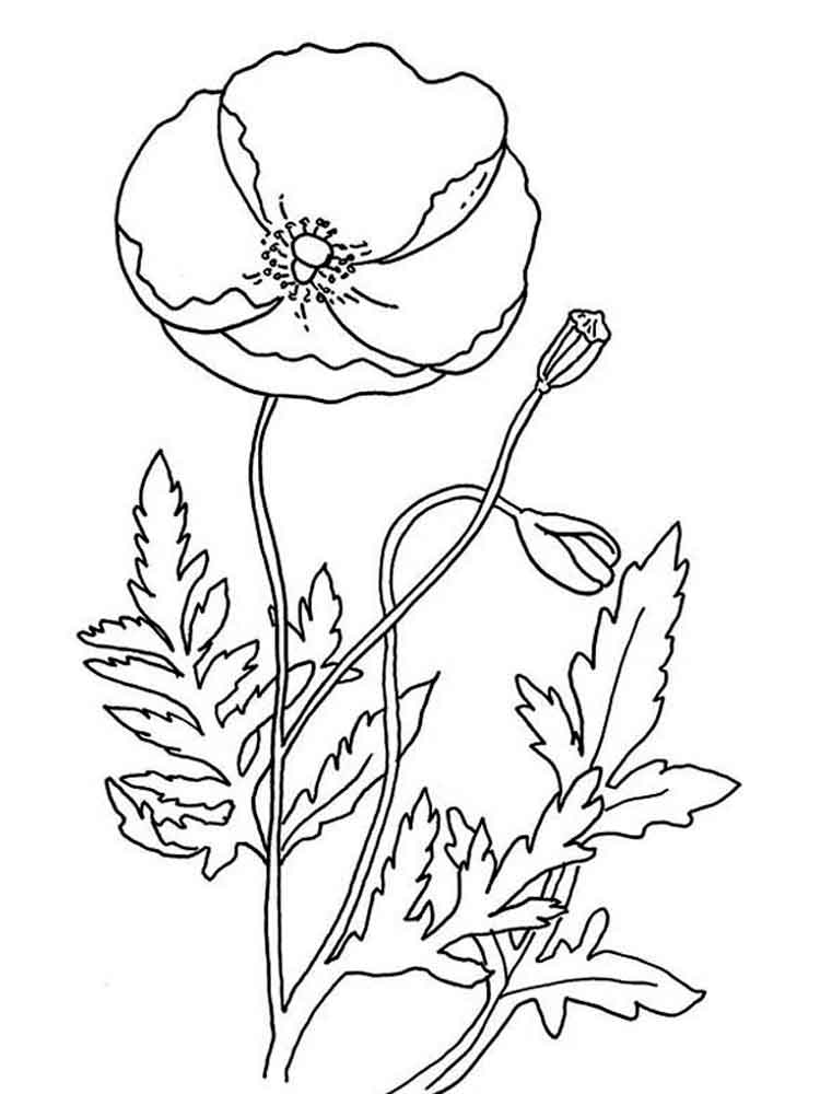 Poppies Printable Coloring Pages