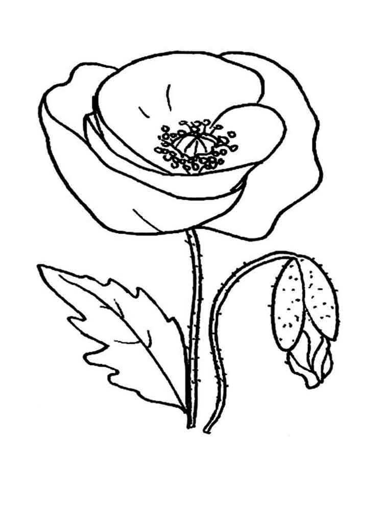 Poppy - Printable Coloring Pages