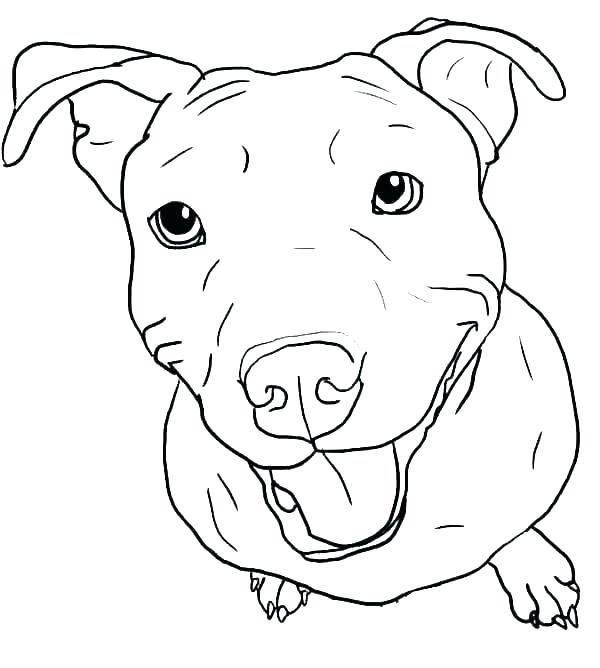 Pretty Pitbull Coloring Pages