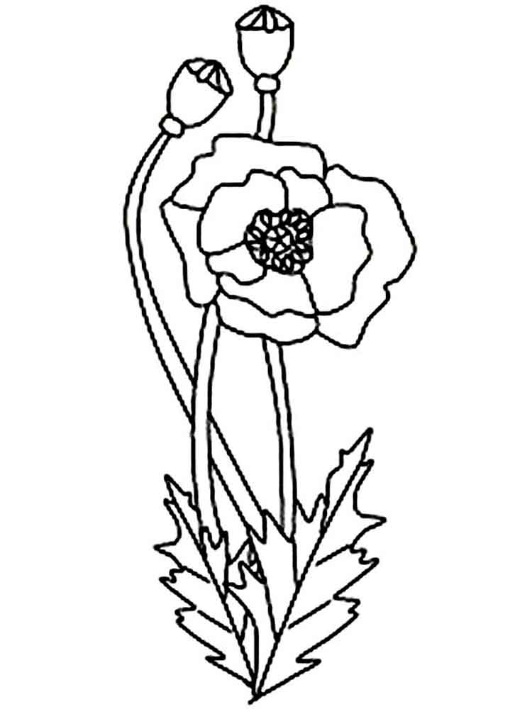 Pretty Poppies Coloring Page