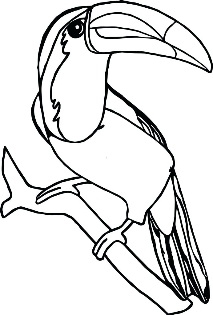 Pretty Toucan Coloring Pages