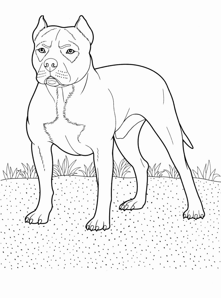 Printable Pitbull Coloring Pages