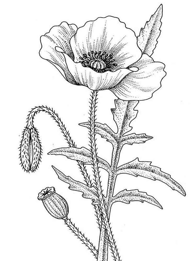 Printable Poppies Coloring Page