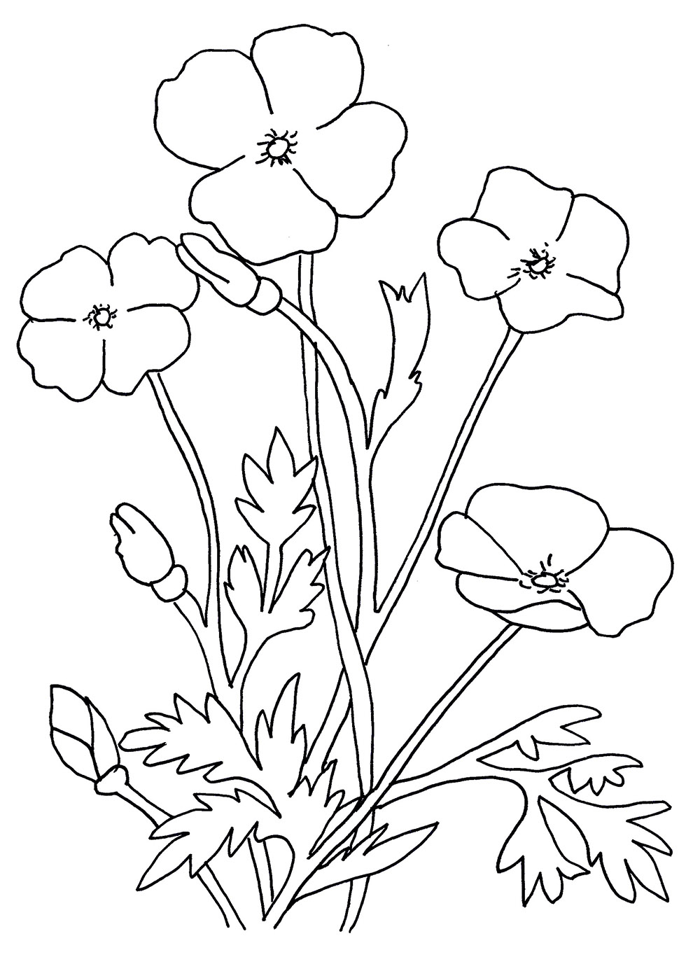 image relating to Poppies Printable called Poppies Coloring Webpages - Most straightforward Coloring Internet pages For Youngsters