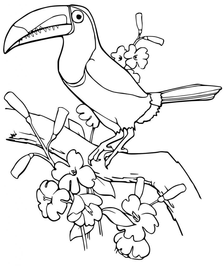 Printable Toucan Coloring Pages