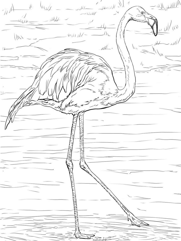 Realistic Flamingo Coloring Pages