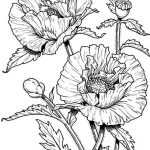 Realistic Poppies Coloring Pages