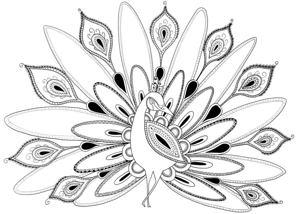 Free Peacock Coloring Pages Awesome Imagination Peacock Coloring Page Pages Printable In Tiny Draw