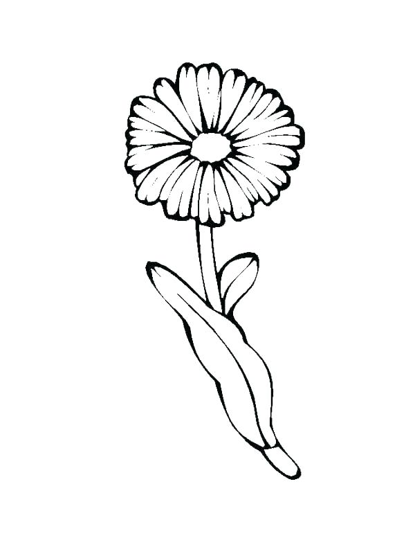 Single Daisy Flower Coloring Page