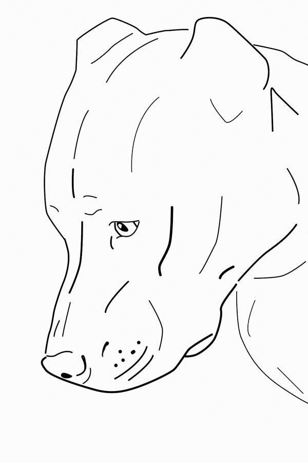 Sweet Pitbull Coloring Page